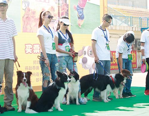贝斯特bst318手机版CKU全犬种中国冠军舞