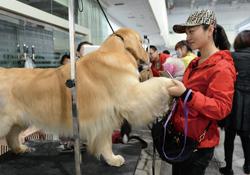 2016中国(西部)宠物产业博览会